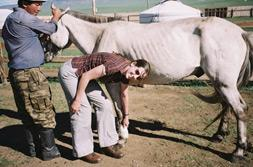Projects Abroad France - Medecine Veterinaire Mongolie