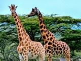 Line Labissy, mission écovolontariat au Kenya