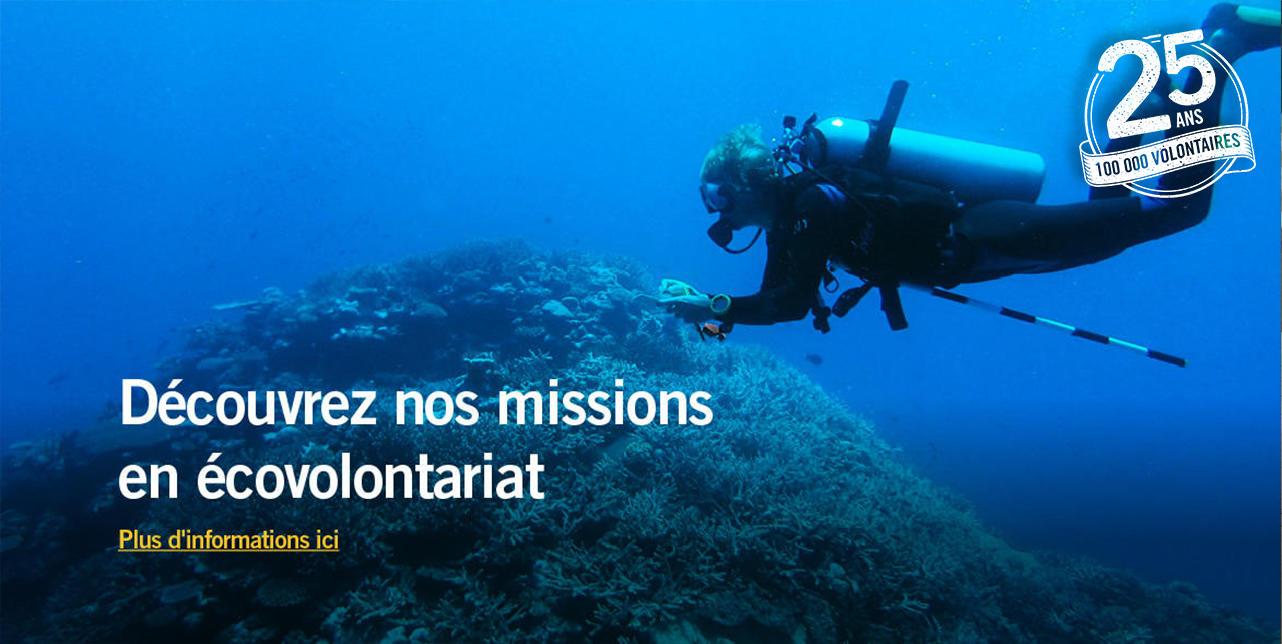Des missions d'écovolontariat pour protéger notre environnement à travers le monde