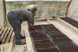 Agriculture communautaire : Jamaïque