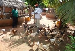 Missions de volontariat et stages au Togo : Agriculture communautaire
