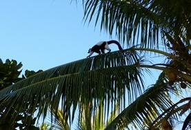 Chantiers écovolontariat et environnement : Madagascar