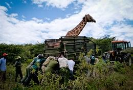 Chantiers écovolontariat et environnement : Kenya