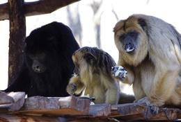 Chantiers d'été soins animaliers : Argentine