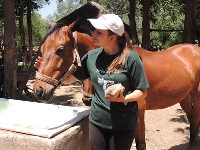 Une volontaire de Projects Abroad aide à prendre soin d'un cheval qui participe à la thérapie équestre en Bolivie.