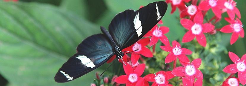 Un papillon au sein de la réserve, au Costa Rica