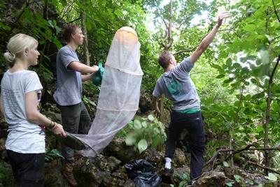 Etude des papillons en forêt tropicale