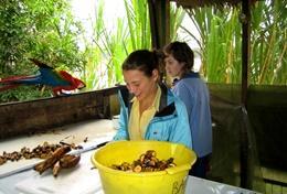 Missions de volontariat et stages au Pérou : Ecovolontariat &   environnement