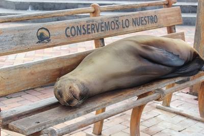 projet écovolontariat en Equateur