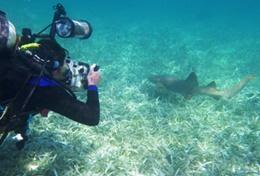 Écovolontariat & environnement : Belize