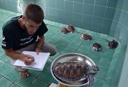 Missions de volontariat et stages en Thaïlande : Ecovolontariat &   environnement