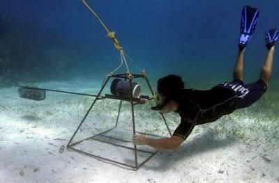 Ecovolontariat pour la protection des requins aux Fidji