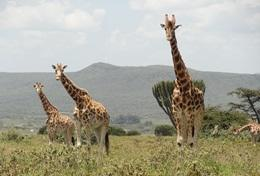 Écovolontariat & environnement : Kenya