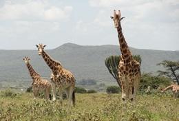 Écovolontariat & Environnement en Afrique : Kenya