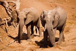 Écovolontariat & environnement : Afrique du Sud