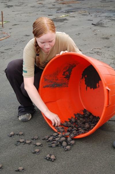 Protection des tortues marines au Mexique