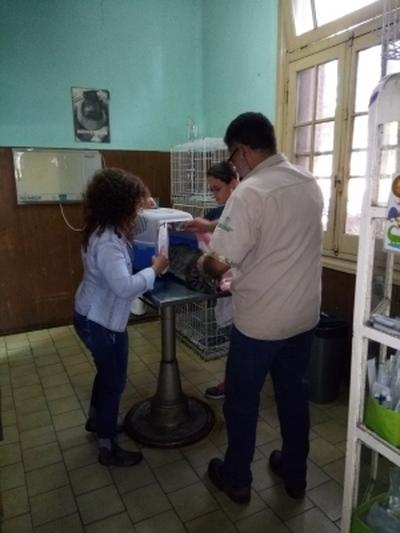 Des volontaires assistent les vétérinaires