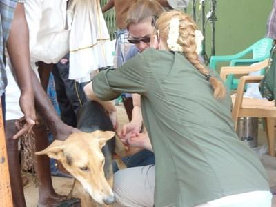 Stage médecine vétérinaire tropique