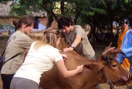 Mission humanitaire auprès d'animaux:médecine vétérinaire et soins animaliers : Sri Lanka