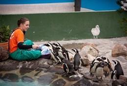 Mission humanitaire auprès d'animaux:médecine vétérinaire et soins animaliers : Afrique du Sud