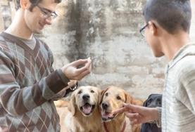 Mission humanitaire auprès d'animaux:médecine vétérinaire et soins animaliers : Belize