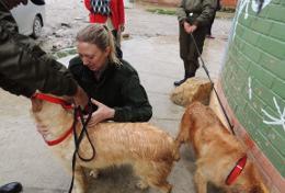 Mission humanitaire auprès d'animaux:médecine vétérinaire et soins animaliers : Bolivie