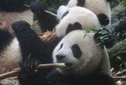 Mission de volontariat auprès d'animaux:médecine vétérinaire et soins animaliers : Chine