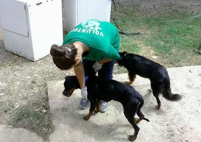 Volontaire en stage vétérinaire en Jamaïque
