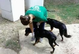 Missions de volontariat et stages en Jamaïque : Médecine vétérinaire &   soins animaliers