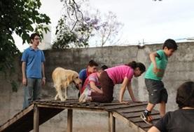 Mission humanitaire auprès d'animaux:médecine vétérinaire et soins animaliers : Argentine