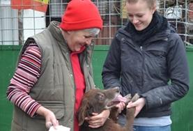 Mission humanitaire auprès d'animaux:médecine vétérinaire et soins animaliers : Roumanie