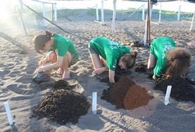 Missions de volontariat et stages au Mexique : Écovolontariat &  environnement