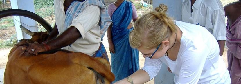 Mission de soins animaliers