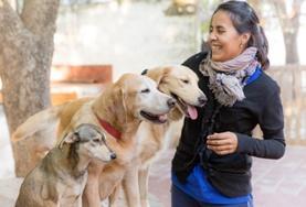 Bénévolat vétérinaire: soins vétérinaires et animaliers en Afrique, Asie, Amérique latine : Argentine