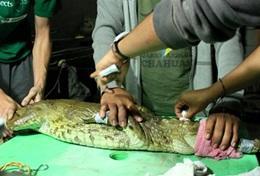 Missions de volontariat et stages au Pérou : Médecine vétérinaire