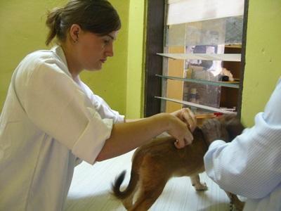 Soigneur vétérinaire diplômé aux Samoa