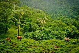 Bénévolat vétérinaire: soins vétérinaires et animaliers en Afrique, Asie, Amérique latine : Samoa