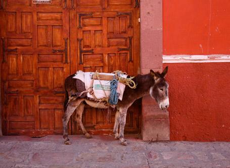 Un âne photographié dans la rue au Mexique