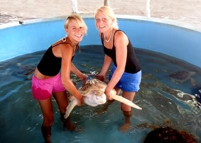 Turtle conservation volunteers in Mexico with Projects Abroad