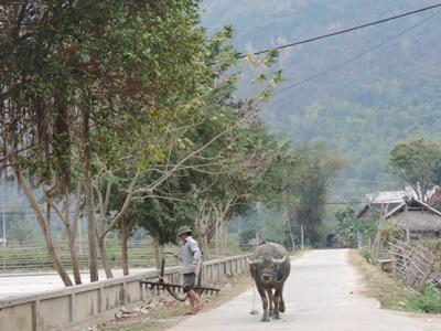 Un bœuf et un paysan près de la montagne au Vietnam